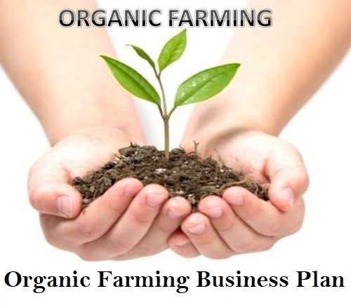 Organic Farming Business Plan Investments Profits