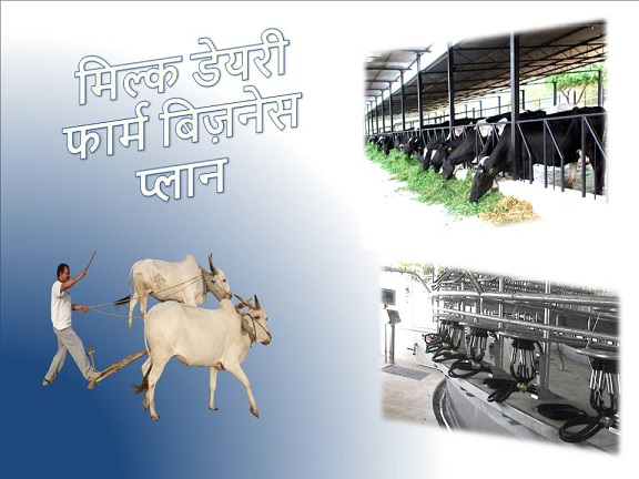 dairy farming business plan